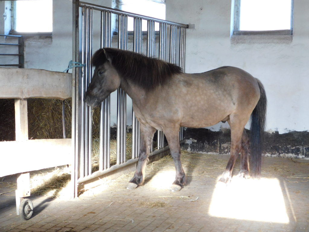 Offenstall artgerechte Pferdehaltung Rostock
