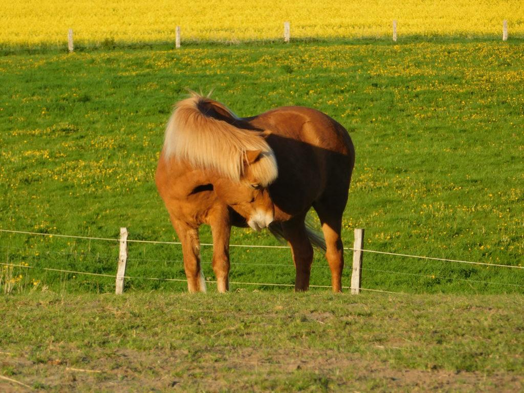 Aktivstall Pferdehaltung Rostock